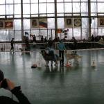 Выставка 15.04.2006 - монопородная