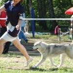 Фестиваль Северных Ездовых Собак