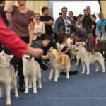 WORLD DOG SHOW 2012, Salzburg, Austria