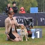 Выставка в Ильинском. Яша BIS-puppy