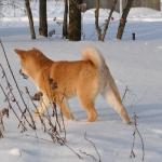 Зимняя Сара_12