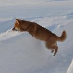 Зимняя Сара_15