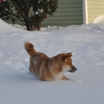 Зимняя Сара_4
