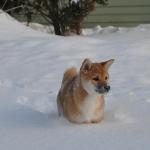 Зимняя Сара_6
