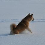 Зимняя Сара_8